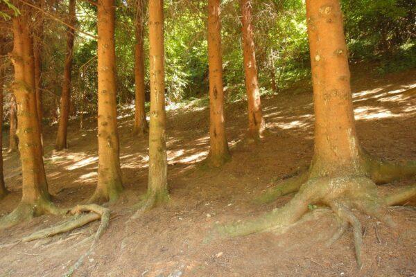 lovely-trees-in-the-park